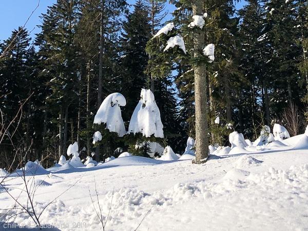Schnee-Tannen