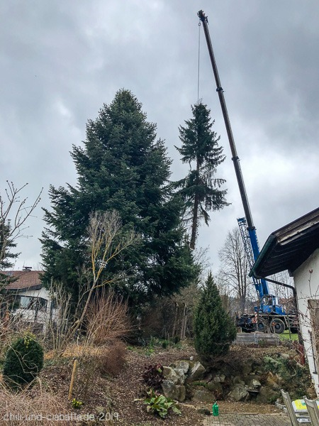 Baum am Haken