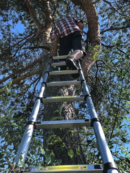 T5 mit Leiter