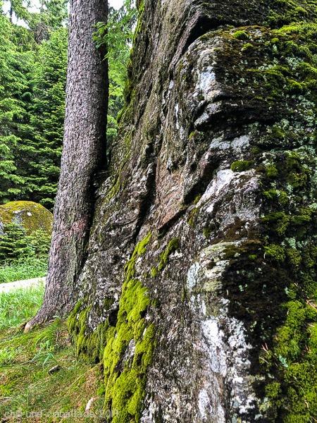 Baum küsst Felsen