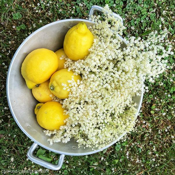 Zitrone und Holunderblüten