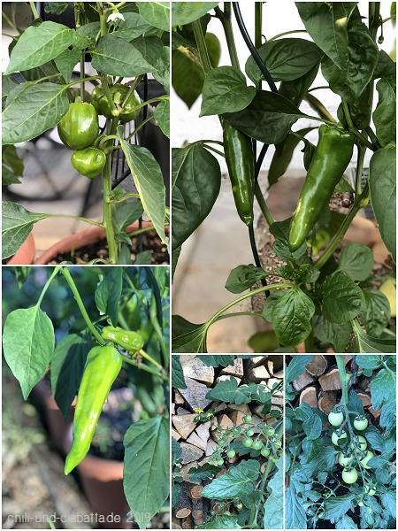 Chilis und Tomaten
