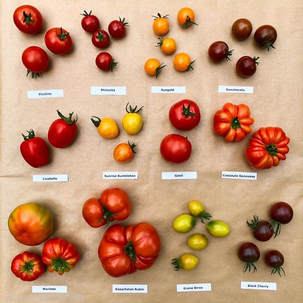 Tomatensorten 2019