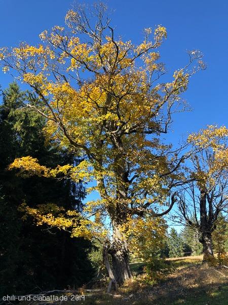 Schachtenbaum