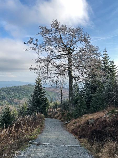 Lusen Winterweg