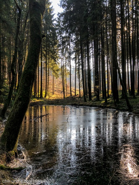 Tümpel im Wald