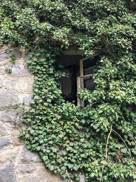 Verwunschenes Fenster