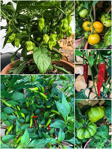 Tomaten und Chilis
