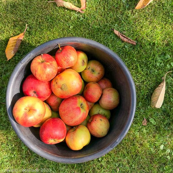 Fall-Äpfel
