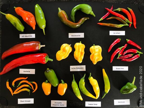 Chilisorten 2020