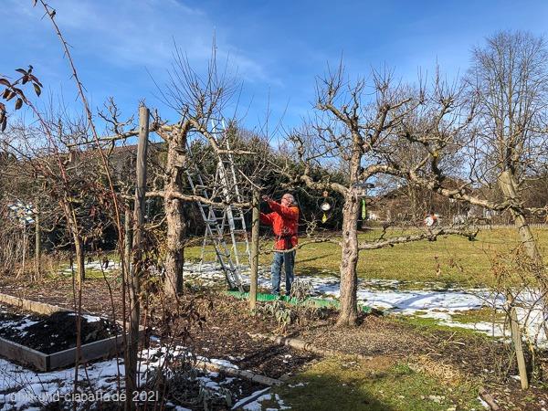 Apfelbaumschnitt