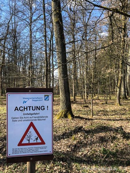 Auenwälder