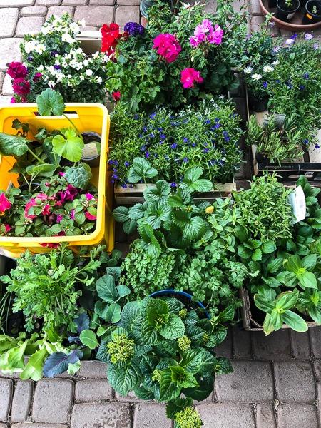 Sommerblumen-Einkauf