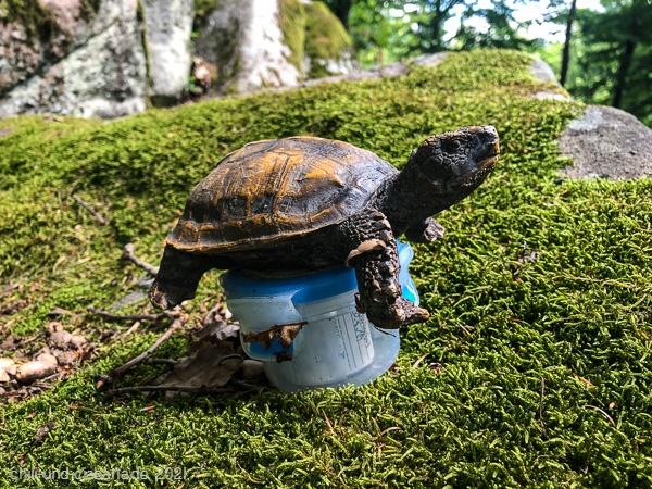 The Turtle II