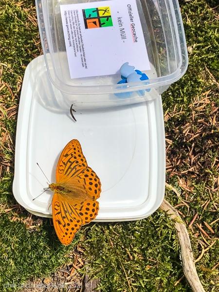 Schmetterling Kaisermantel?