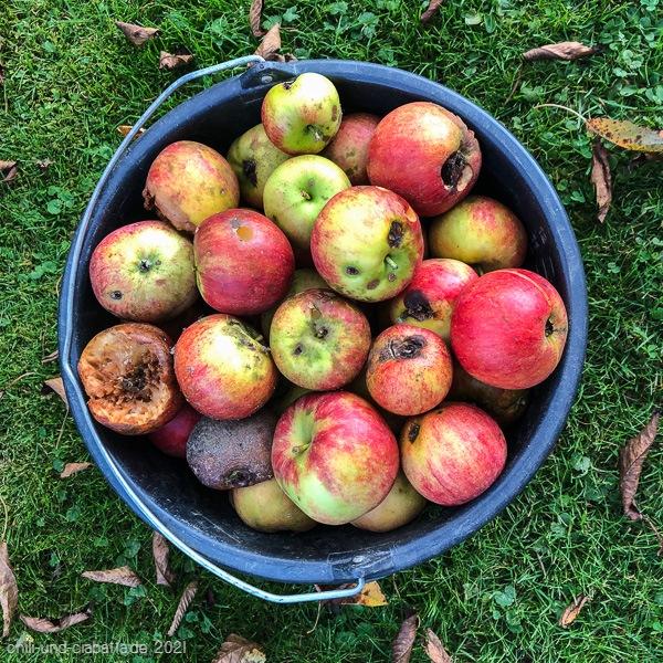 Gammelige Äpfel