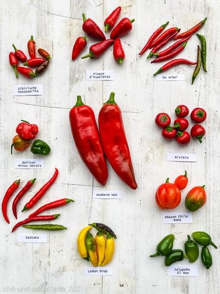 Chilisorten im anbau 2021