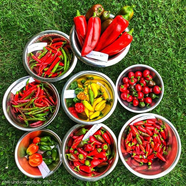 Chilis Erträge